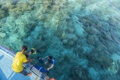 Diving (II)