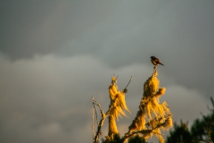 03-Joris_BERTRAND_Sunset_Tect_Tec